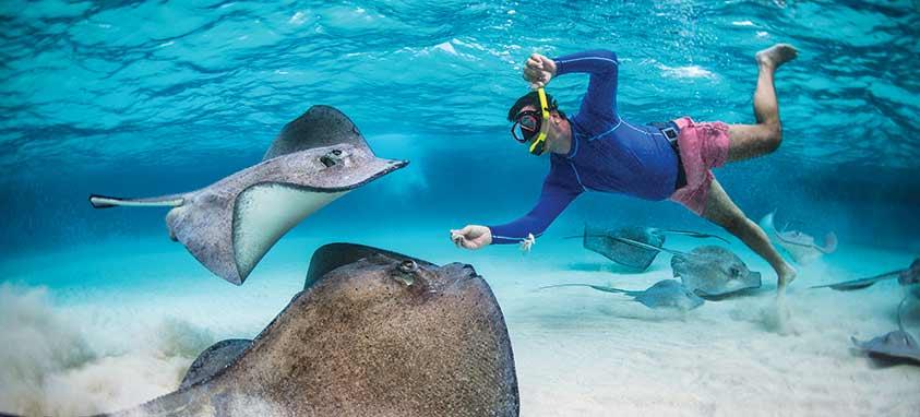 Stingrays-Cayman-Islands