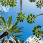 Q&A with Peggy Benua of Miami Beach VCA