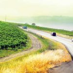 Wine Country Meetings: Grape-Driven Pilgrimages