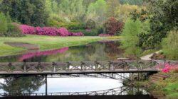 Bellingrant Gardens